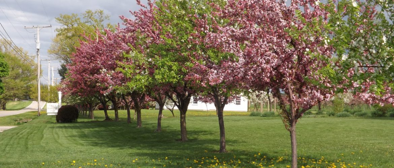 Polly Harper Inn Crabapple Trees