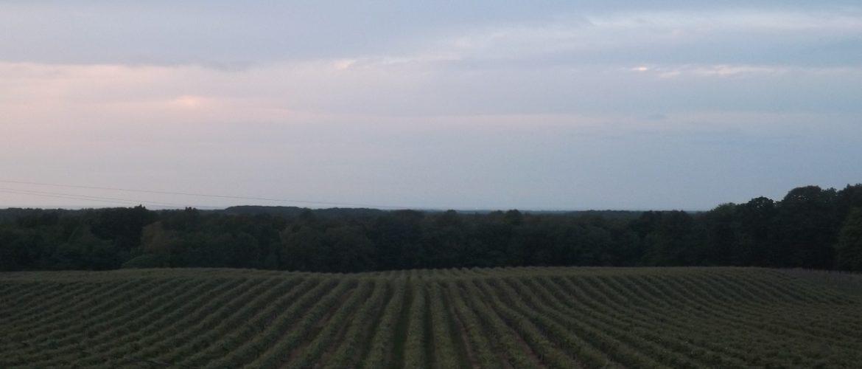Polly Harper Inn View of Vineyards